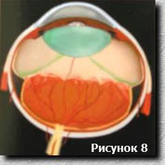 Схема 4 стадии ретинопатии